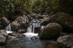 Dżungla strumień, Panama Obrazy Stock