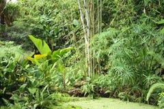 dżungla tło Zdjęcia Stock