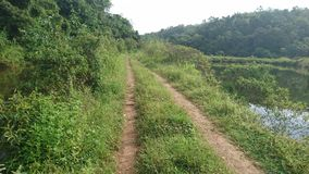 Dżungla tropi drogę w żaden sposób fotografia stock