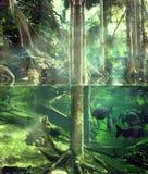 dżungla tropikalna Zdjęcia Stock