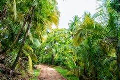 Dżungla, tropikalny las deszczowy, lasowa ścieżka w dżungli diabeł wyspa, francuska gwinea Drzewka palmowe z zielonymi liśćmi Nat obraz stock