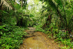 Dżungla w Ameryka Środkowa Obrazy Stock