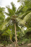 Dżungla w Anse Lazio plaży Zdjęcie Stock