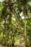 Dżungla w Anse Lazio plaży Zdjęcia Royalty Free