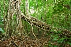 Dżungla w Nam kota Tien parku narodowym Obraz Stock