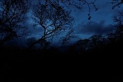 Dżungla w wiosce Calakmul, Meksyk zdjęcia royalty free