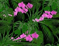 Dżungla Zieleń liście tropikalne palmy, monstera, agawy purpurowe orchidee Krople rosa, deszcz bezszwowy Odizolowywający dalej ilustracja wektor