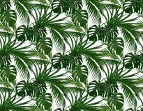 Dżungla Zieleń liście tropikalni drzewka palmowe, monstera, agawa bezszwowy pojedynczy białe tło ilustracja royalty ilustracja