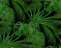 Dżungla Zieleń liście tropikalni drzewka palmowe, monstera, agawa Krople rosa, deszcz bezszwowy Na czarnym tle ilustracji