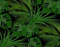 Dżungla Zieleń liście tropikalni drzewka palmowe, potwory, agawa Krople rosa, deszcz bezszwowy pojedynczy białe tło royalty ilustracja