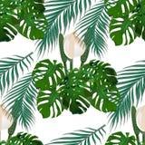 Dżungla Zielony tropikalny liść, potworów kwiaty i palmowi liście, bezszwowy kwiecisty wzoru Na białym tle royalty ilustracja