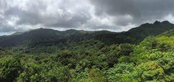 Dżungle w El Yunque lesie państwowym Obraz Royalty Free