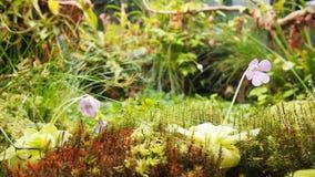 Dżungli łąka Zdjęcie Stock