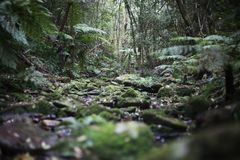 Dżungli ścieżka obrazy royalty free