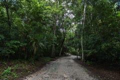 Dżungli ścieżka w Tikal parku Zwiedzający przedmiot w Gwatemala z Majskimi świątyniami i ceremoniał ruinami obrazy royalty free