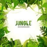 Dżungli dekoraci Tropikalny tło ilustracja wektor