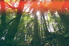 Dżungli drzew rocznika natury lasowy tło Obrazy Royalty Free