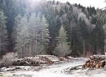 Dżungli i cięcia drzewa zdjęcia stock