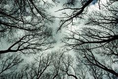 Dżungli lasowych drzew dolny widok w jesieni zimie z gałąź bez liści przy parkiem w chmurnego dnia nieba natury popielatym tle Zdjęcia Royalty Free