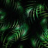 Dżungli nocy tło Zdjęcie Stock