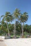 Dżungli palmy i dżungla las na piasku wyrzucać na brzeg w Koh Samui wyspie w Tajlandia Fotografia Stock