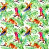 Dżungli papugi, egzot rośliny - palma, monstera, kwitnie deseniowy target101_0_ Aquarelle Obraz Royalty Free