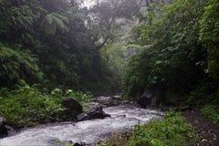 Dżungli podwyżka w Bali Indonezja i rzeka fotografia royalty free