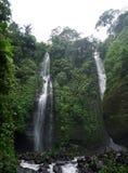 Dżungli podwyżka w Bali Indonezja prawdziwych zielonych roślinach i siklawie zdjęcie royalty free