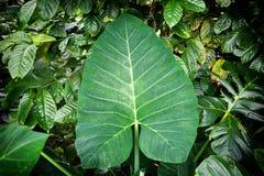 Dżungli zieleń opuszcza lata tło w egzotycznych brzmieniach obraz royalty free