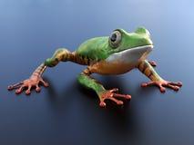 3D一只现实雨蛙的翻译 免版税图库摄影