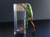 3D上升在玻璃的一只现实雨蛙的翻译 图库摄影