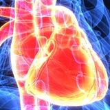 3d人体心脏解剖学的例证 库存图片