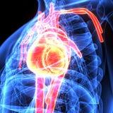 3d人体心脏解剖学的例证 免版税库存照片