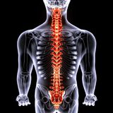 3d人体的illustrarion人体脊髓分开 免版税库存照片