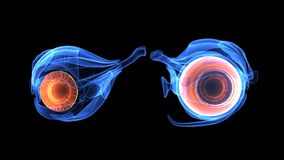 3d人体眼睛解剖学的例证 免版税图库摄影