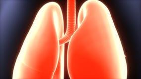 3d人体肺解剖学的例证 免版税库存照片