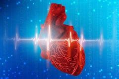 3d人的心脏和心电图的例证在未来派蓝色背景 在医学的数字技术 向量例证