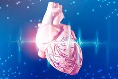 3d人的心脏和心电图的例证在未来派蓝色背景 在医学的数字技术 库存照片
