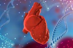 3d人的心脏的例证在未来派蓝色背景的 在医学的数字技术 库存照片