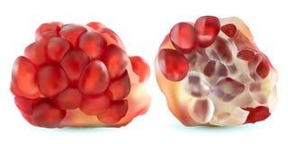 3d传染媒介现实石榴,热带水果集合,隔绝在白色背景 集合成熟石榴 红色红宝石 库存例证