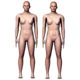 3d例证人体大肠 免版税库存照片