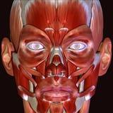 3d例证人体面孔 免版税图库摄影