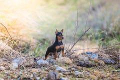 3d剪报在路径短毛猎犬翻译影子白色的狗缩样 图库摄影