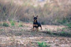 3d剪报在路径短毛猎犬翻译影子白色的狗缩样 库存图片