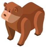 3D北美灰熊的设计 皇族释放例证