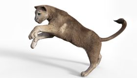 3d困扰美洲狮翻译在白色背景的 免版税库存图片