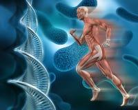 3d在抽象脱氧核糖核酸病毒背景的男性医疗图 库存例证