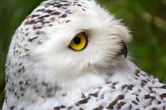 3d在猫头鹰路径翻译影子雪白色的鸟剪报 免版税库存照片