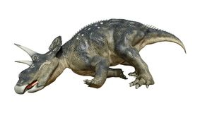 3D在白色的翻译恐龙Diceratops 库存例证