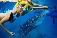 3d在路径的剪报使影子鲨鱼鲸鱼空白 图库摄影